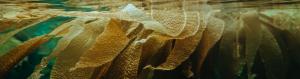 onderzoek naar zeewier